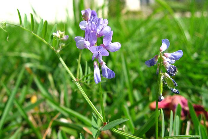 Best Fertilizer for St Augustine Grass in Texas