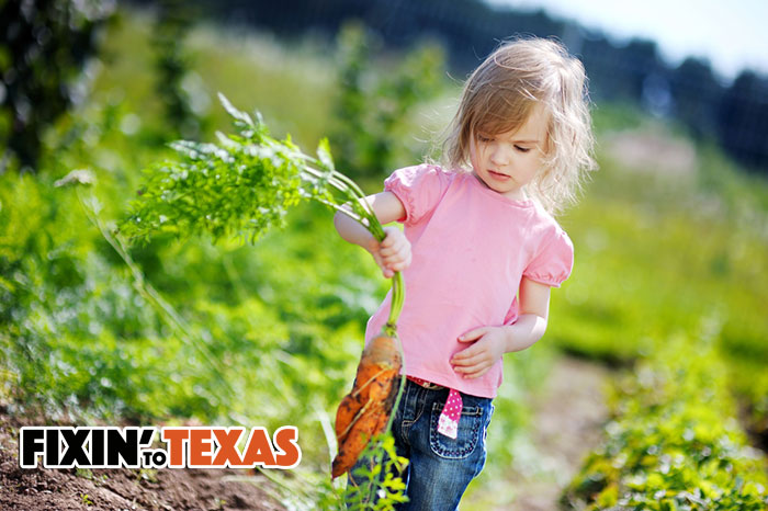 Texas Vegetable Planting Guide Fall