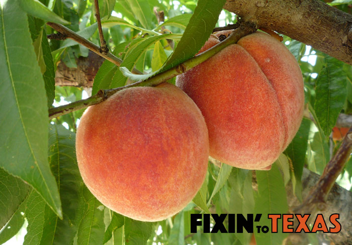 When to Plant Fruit Trees in Texas