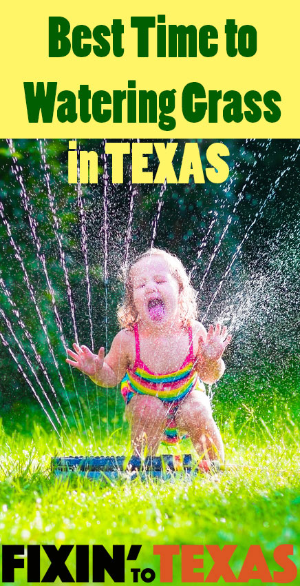 Best Time to Water Grass in Texas