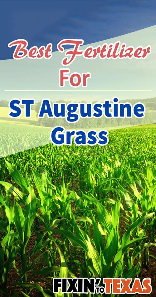 St Augustine grass fertilizer