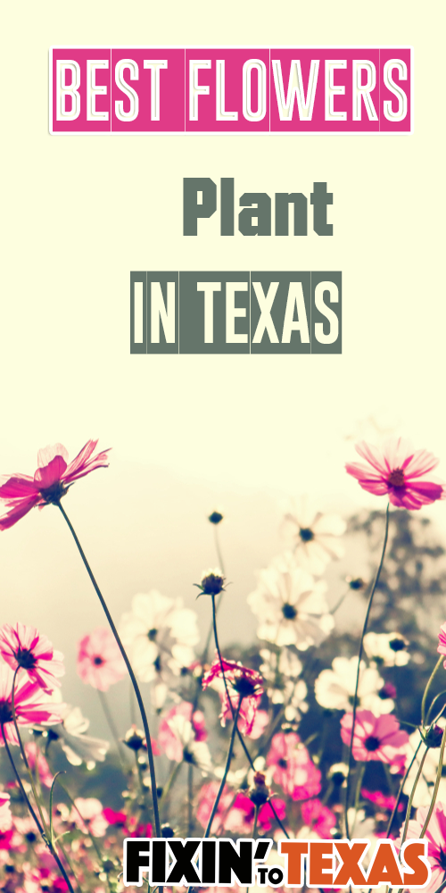 Texas flowers to plant