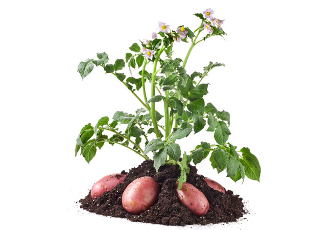 Fall Vegetable Planting Guide