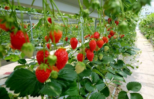 texas vegetable planting